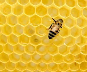 سلامت تغذیه تکنیک تشخیص عسل اصل از تقلبی با کبریت و تخم مرغ