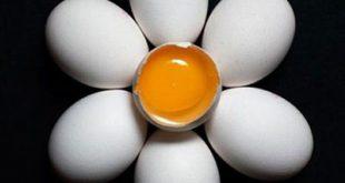 مدت زمان نگهداری تخم مرغ در بیرون از یخچال